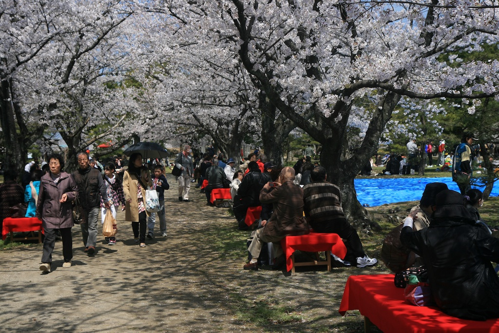 ohori-park-hanami